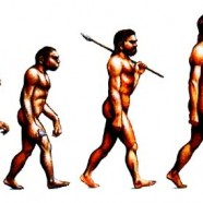 Evolution is Flawed
